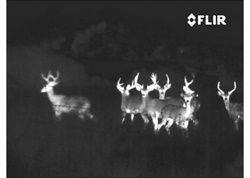 PS32, Group of deer (White Hot)